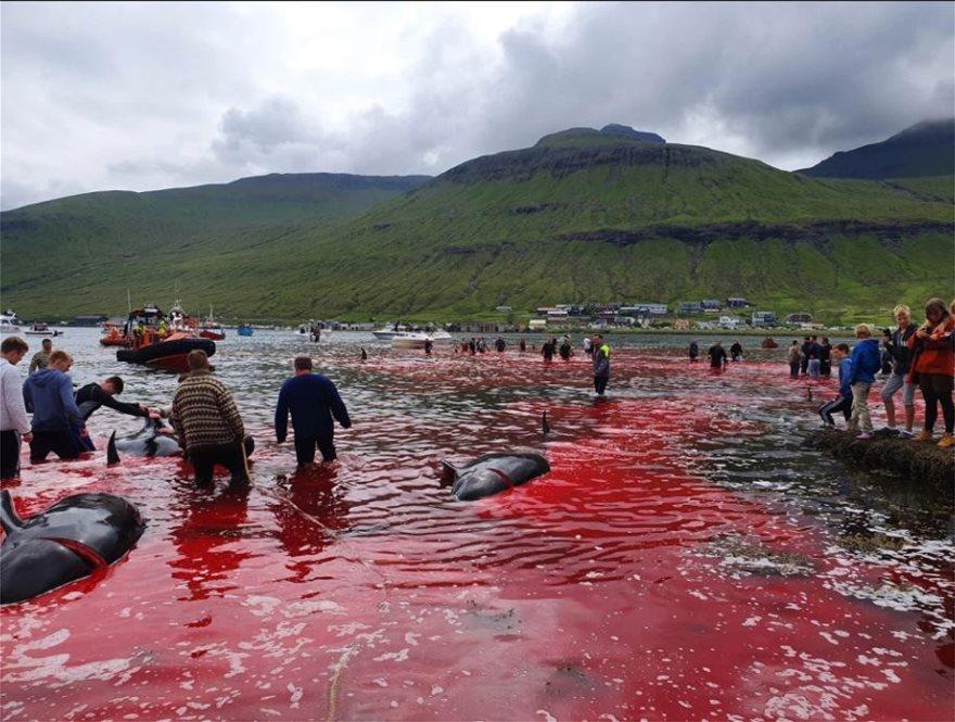 1aa77e21fe6 Η θάλασσα βάφτηκε κόκκινη – Στα νησιά Φερόε δολοφονούν δεκάδες ...